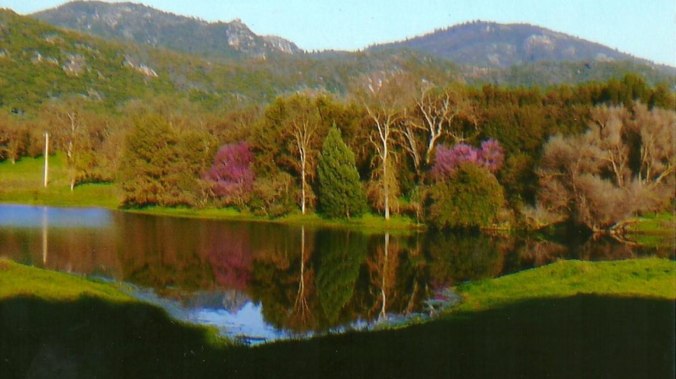Sierra High School pond with Red Bud. Tollhouse Rock in background – Susan Leeper