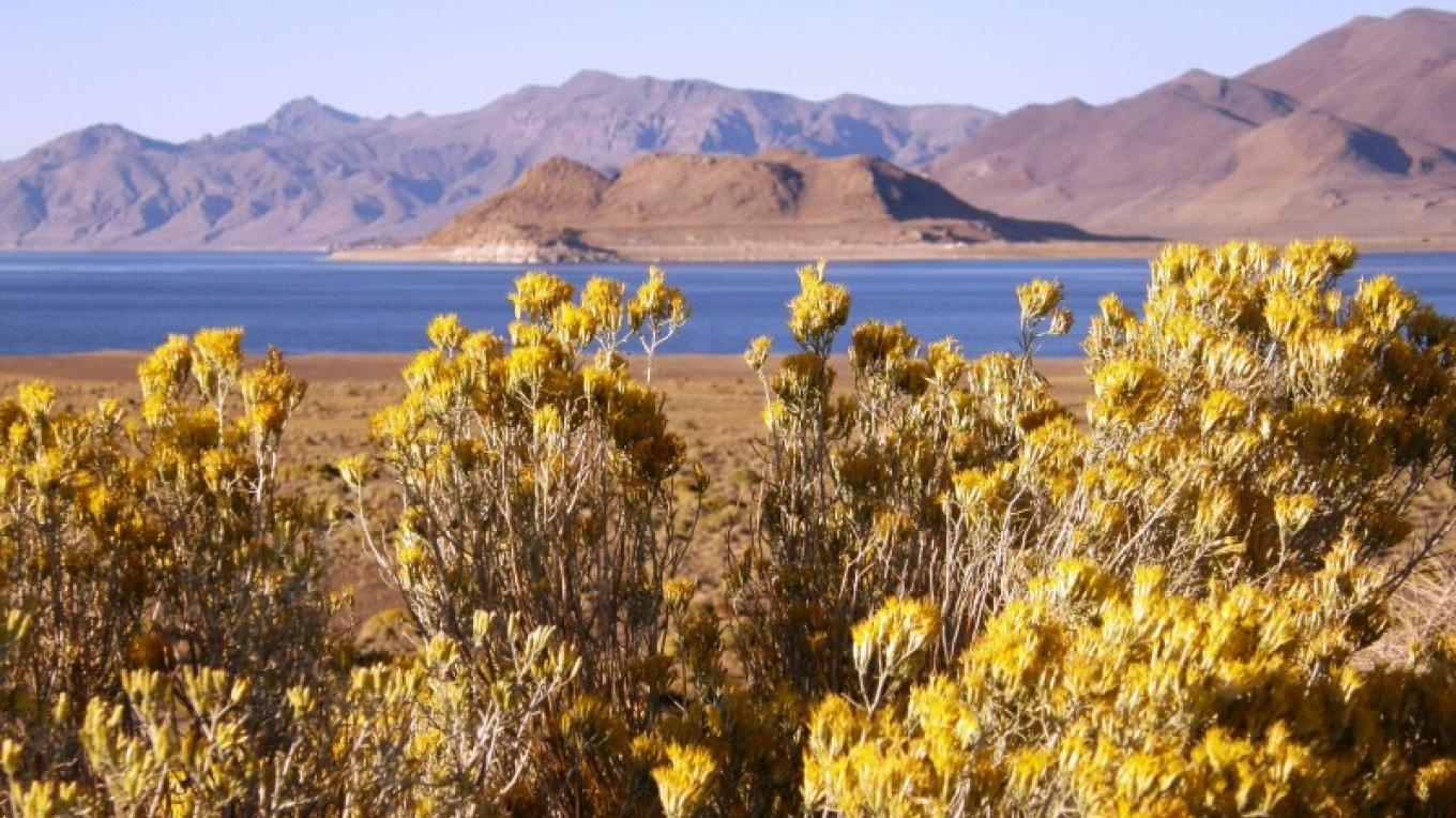 View of Anaho Island National Wildlife Refuge in Spring – Scott H. Carey
