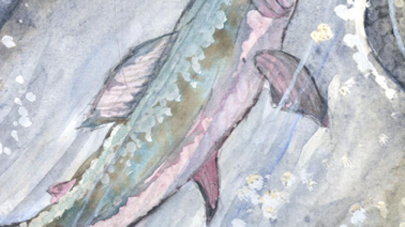 Trout by Deborah Dal Zuffo, showing at the Art Co-op. – Nadi Spencer