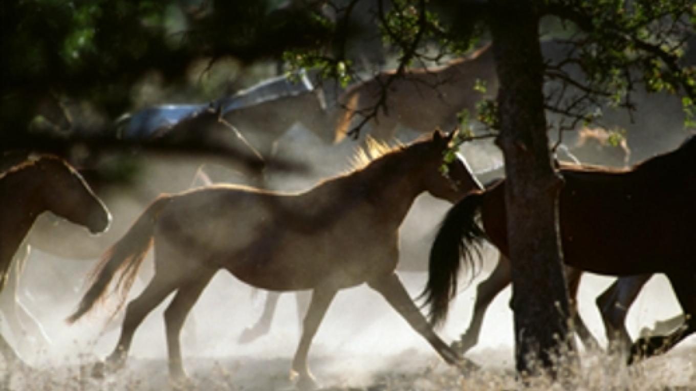 The Wild Horse Sanctuary – Katey Barrett