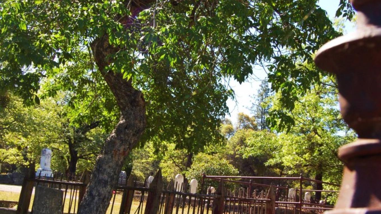 Gold Rush era graves - Divide Cemetery – Denise Henderson