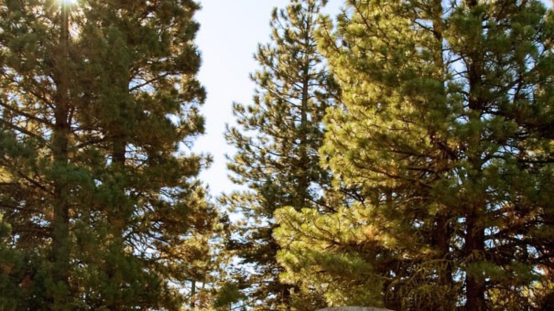 California Historical Landmark 546: Applegate-Lassen Emigrant Trail – noehill.com