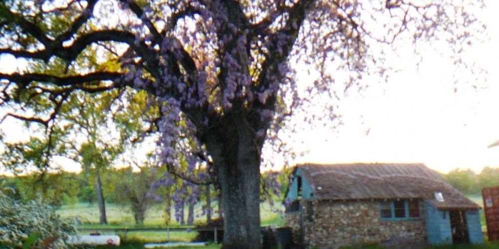 SJ&E switch-yard beyond  tree in field – Susan Leeper