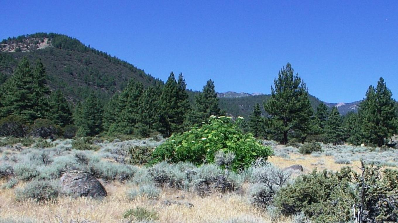 Living on the Edge of two ecosystems-desert sage and forested lands. – Bob Harmon, Washoe County Regional Parks and Open Space