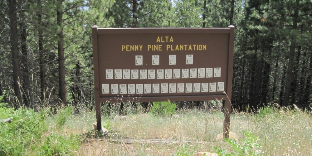 Alta Plantation – John springer USDA/ FS