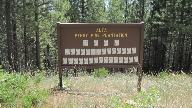 Alta Plantation – John springer USDA/ FS