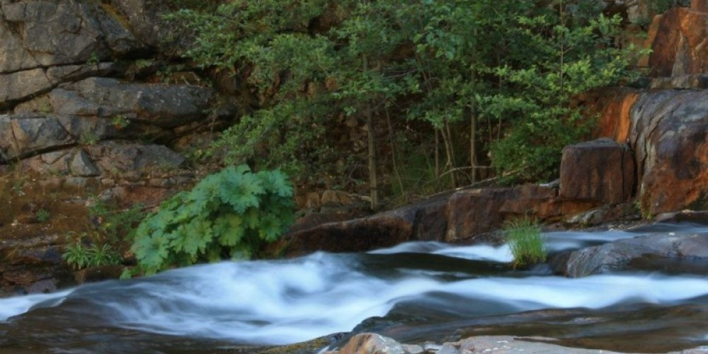 The Clavey River in the Stanislaus National Forest is 1 of 3 rivers in California that flows freely from headwaters to its confluence with the Tuolumne River. CSERC actively works to protect the Clavey River Watershed – Megan Fiske