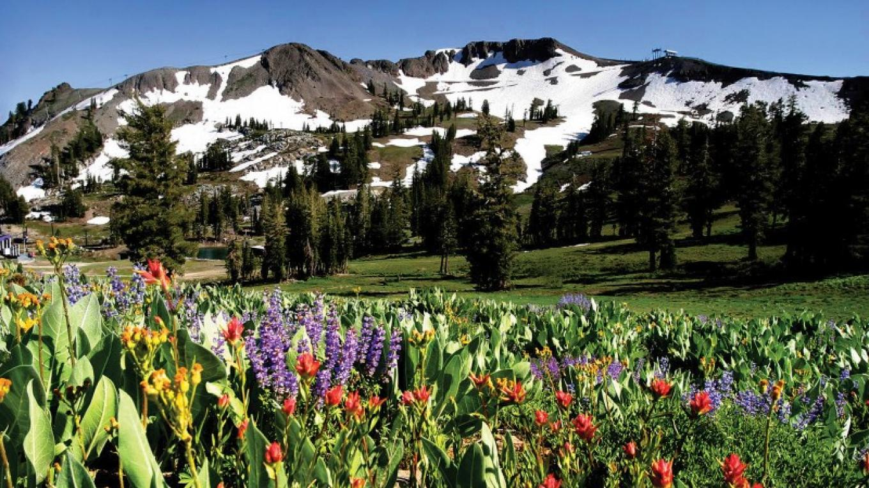 Mountain Flowers – Tom O'Neill