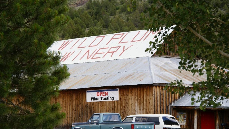 Wild Plum Winery – Lorissa Soriano