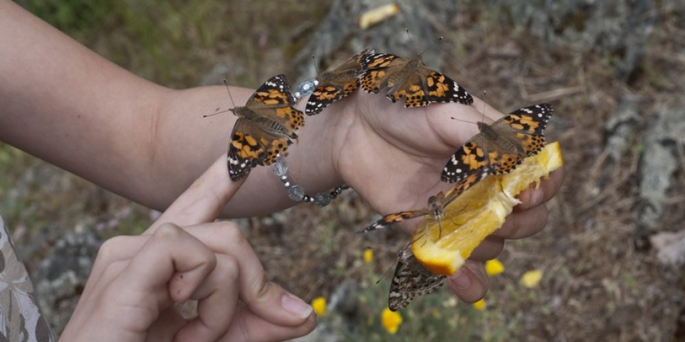 Mariposa  Butterfly Festival – Charles Phillips