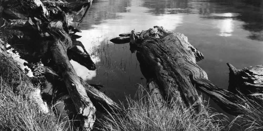 Shoreline, East Lake – Ben Dewell