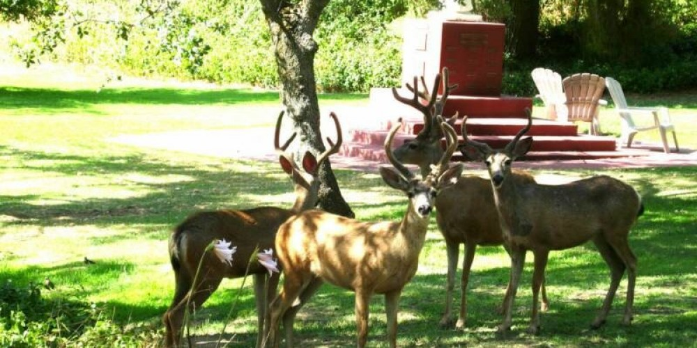 """just some of our """"deer"""" friends"""