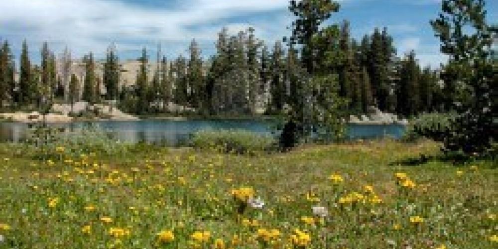 Wildflowers in Bloom, Stanislaus Forrest – Terrance Emerson