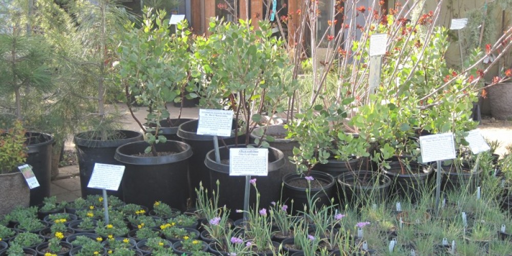 California Native Plants for sale – Bonnie Bladen