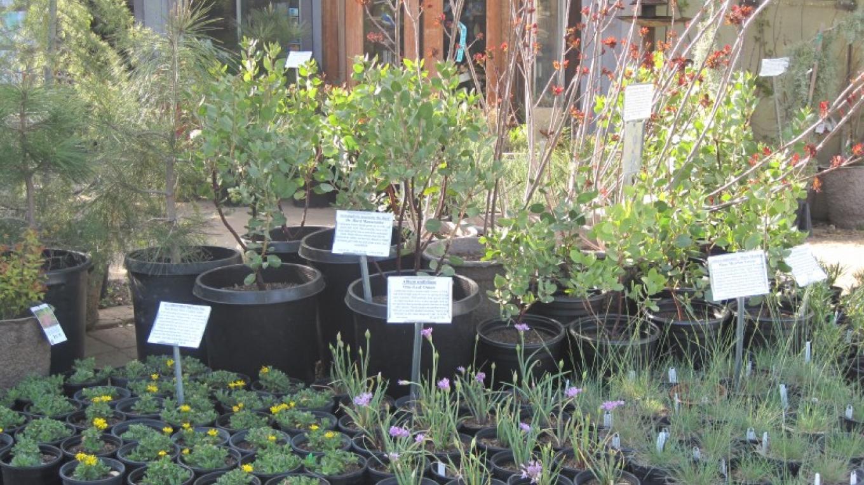 California Native Plants for sale – Bonnie Bladen