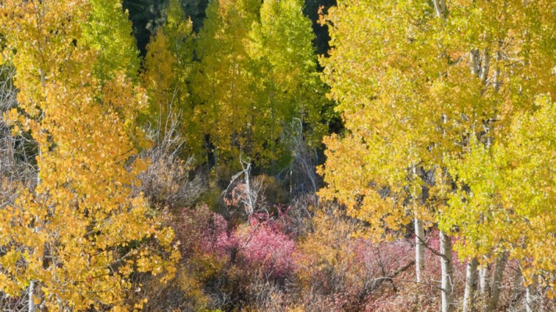 Along Paiute Creek – Joel Rathje