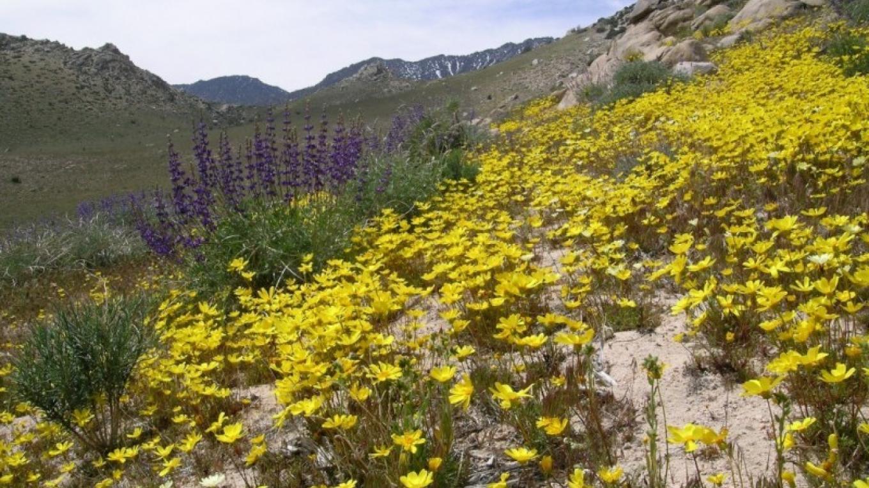 Wild flowers in Short Canyon – Shelley Ellis