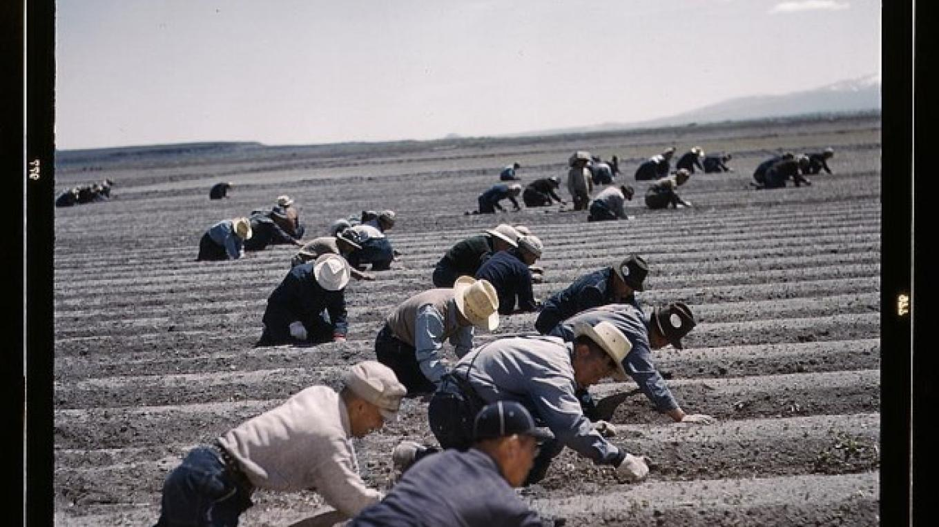 Photo of laborers from the Tule Lake Segregation Camp working in the near-by fields.