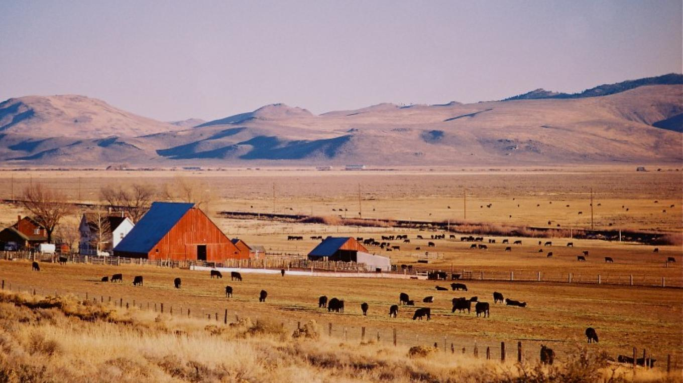 The charming and bucolic lifestyle of the local Sierra Valley agrarian community. – Zachary S. Shea