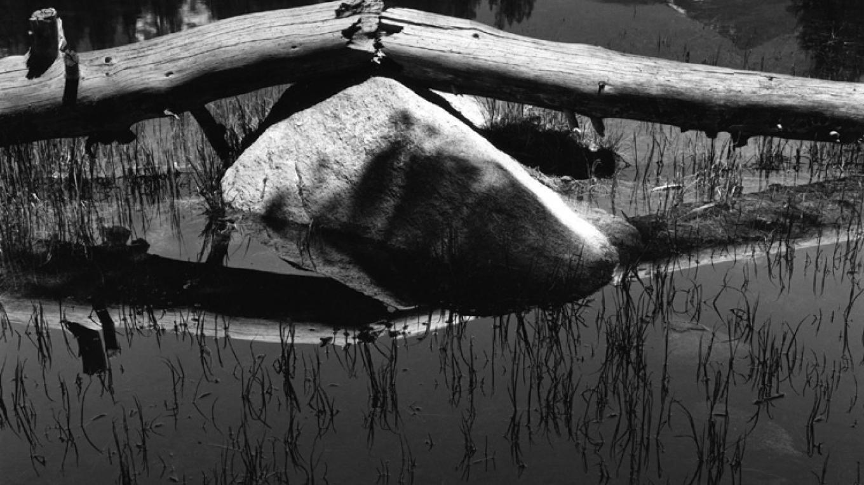 Broken Log, Tuolumne – Ben Dewell