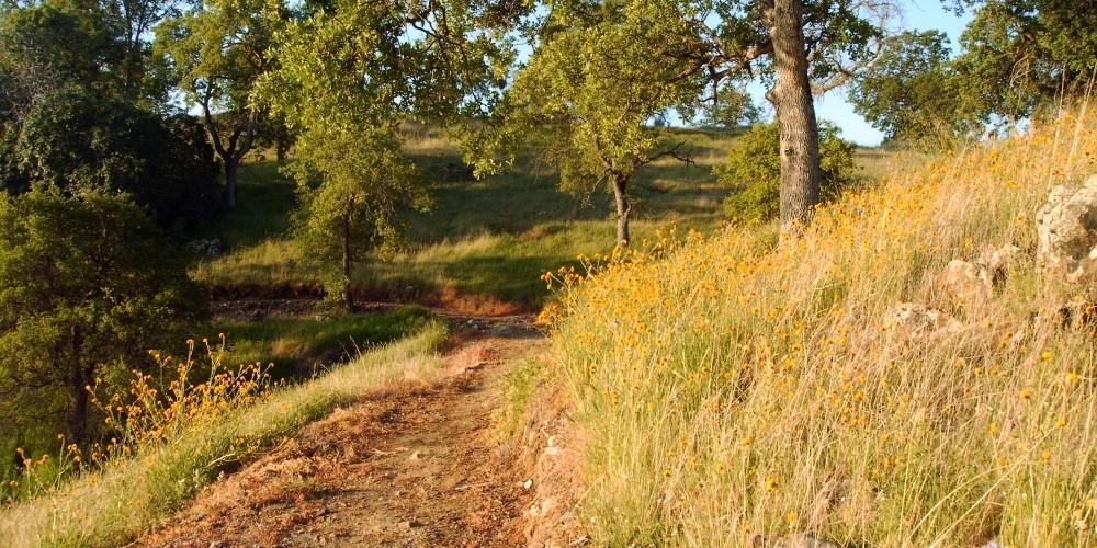 Shoreline trail 7 – Dave Jigour