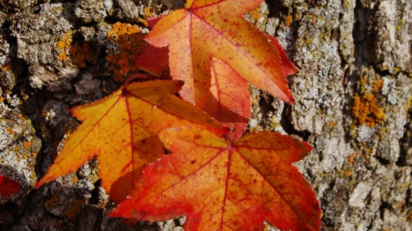 Fall coloring in Three Rivers, California – Tom Marshall