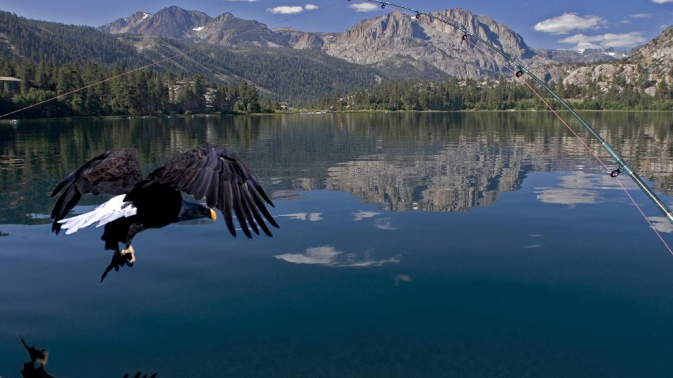 Eagle flying over June Lake
