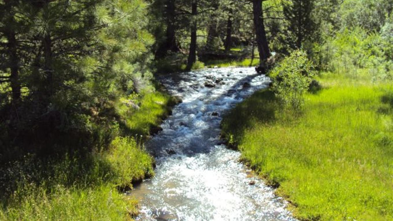 Playing in a nearby creek is fun too. – Betsy Ingraham