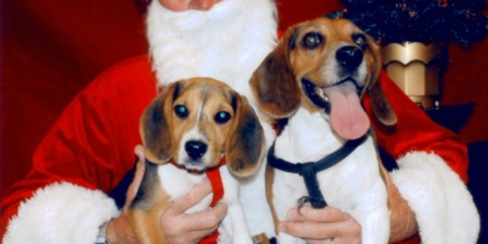 The Beagles - Rusty & Princess Welcome their 4-Legged Guests