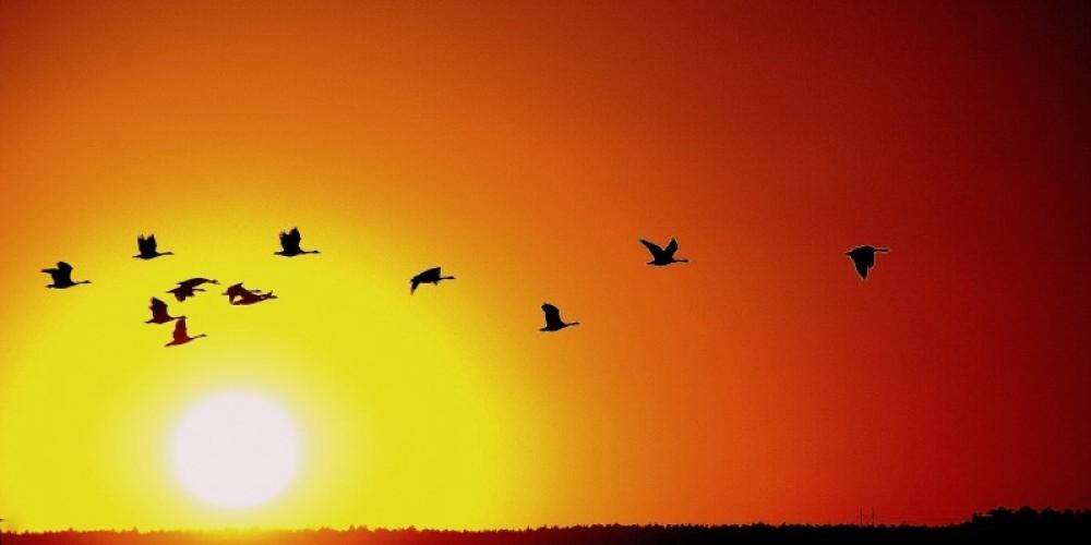 Sunset over the refuge – Lorissa Soriano