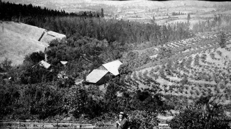 Lombardo Vineyard 1870\'s