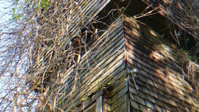 Turn of the century water tank house – Susan Leeper
