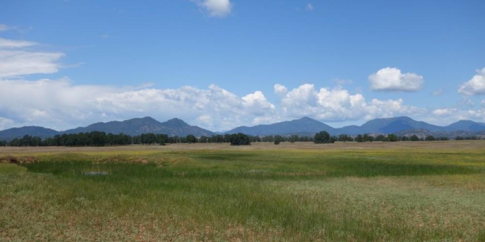 Shasta Land Trust conserves extensive range land and vernal pools. – Anne Murphy