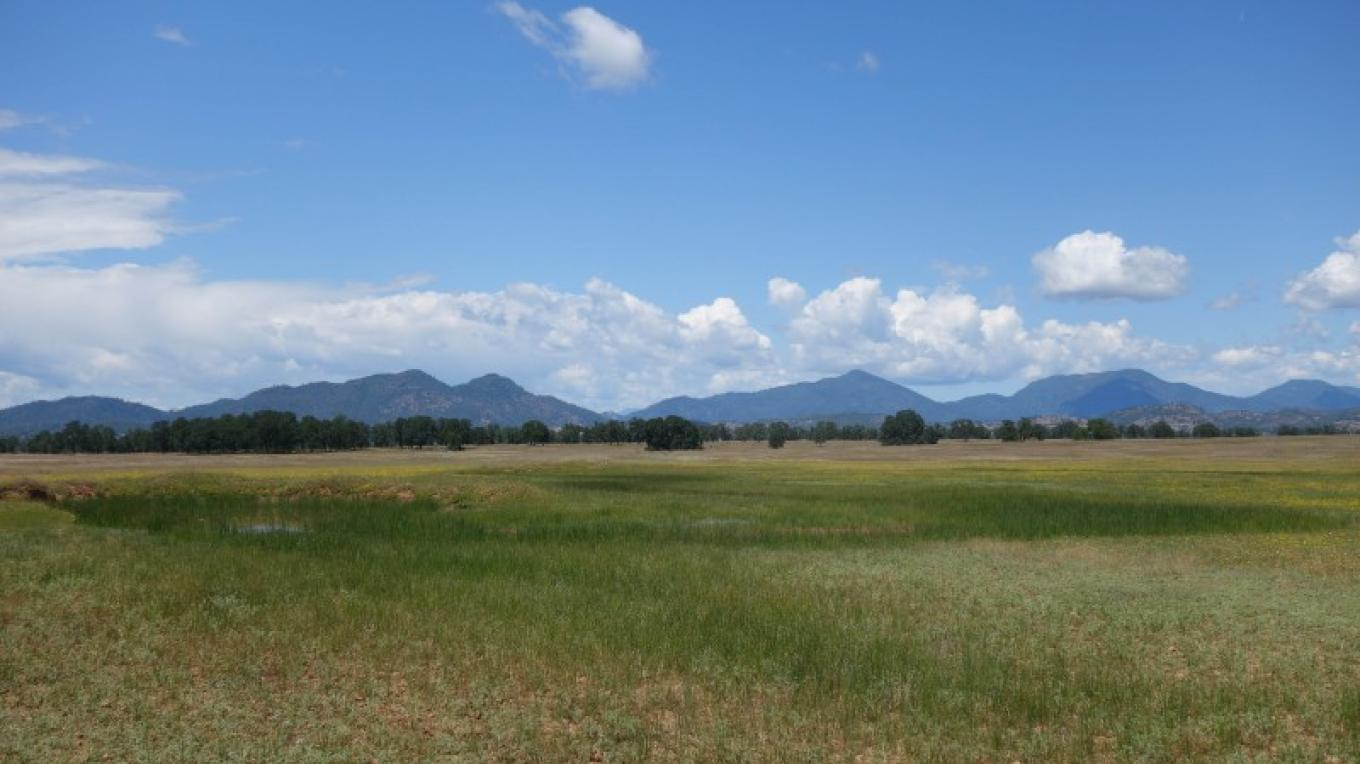 Shasta Land Trust conserves extensive range land and vernal pools. – Anne Murphy