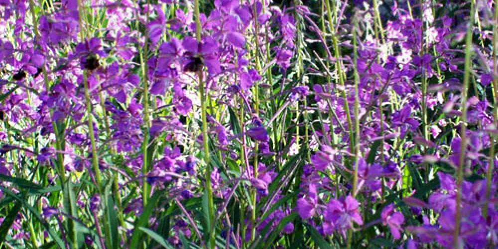 Wildflowers on Cold Creek – Vickie Taton