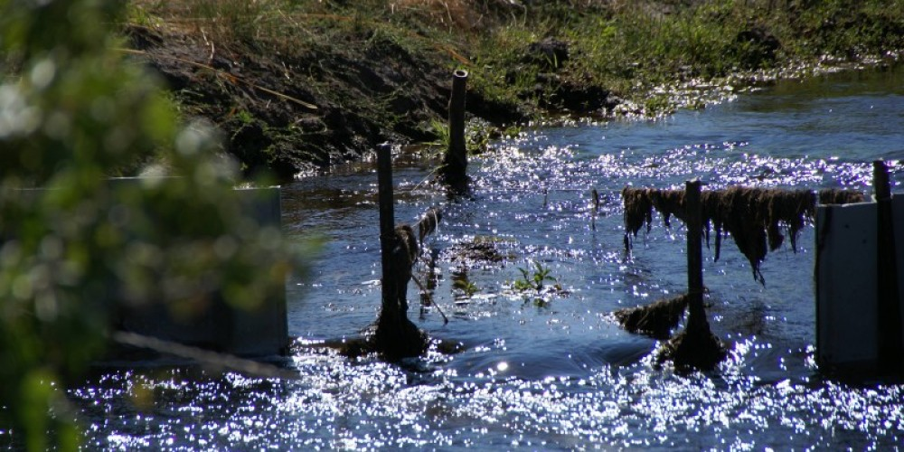 The Flournoy Riparian and Wetland Enhancement Project – Lorissa Soriano