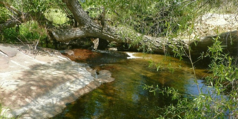 Little Sandy Creek at Intermountain Nursery.  Town of Auberry built on the banks of this creek – Susan Leeper