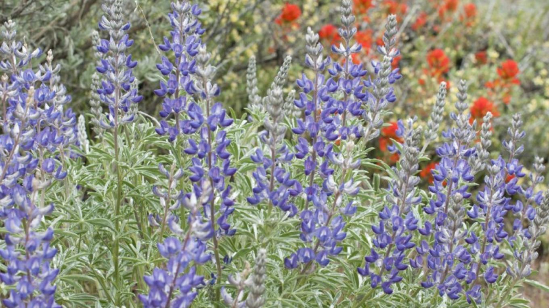 Spring in Susanville Ranch Park – Joel Rathje