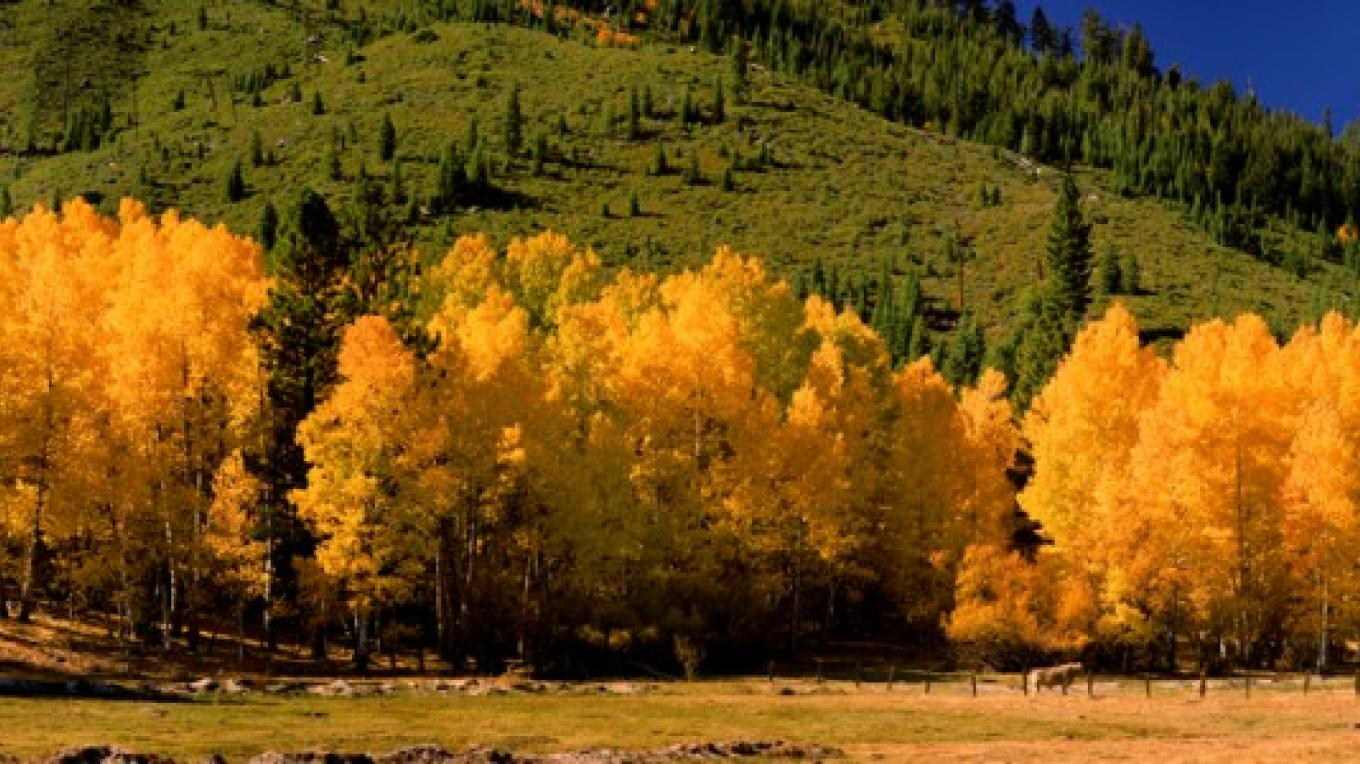 Turner Family Ranch autumn foliage – Darby Hayes