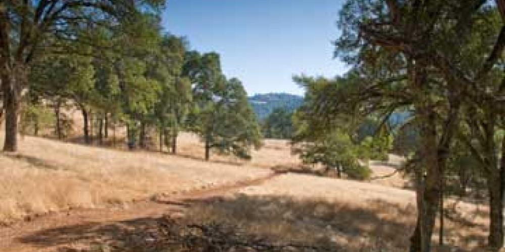 New trail through Oak woodlands – American River Conservancy