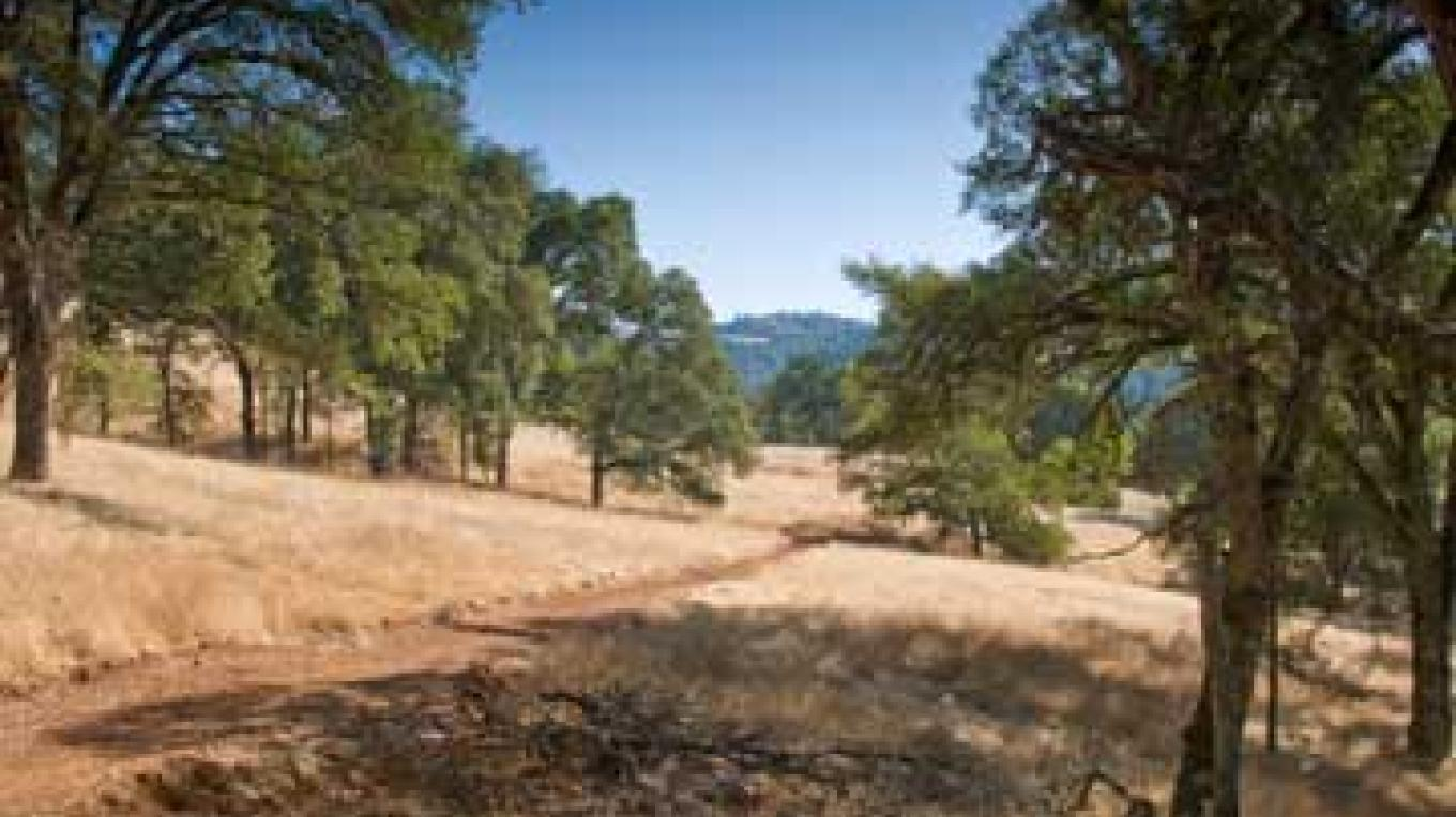 New trail through Oak woodlands – American River Conservancy
