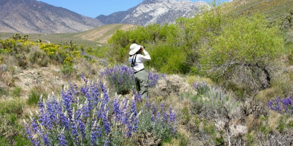 bird watching in Indian Wells Canyon – shelley ellis