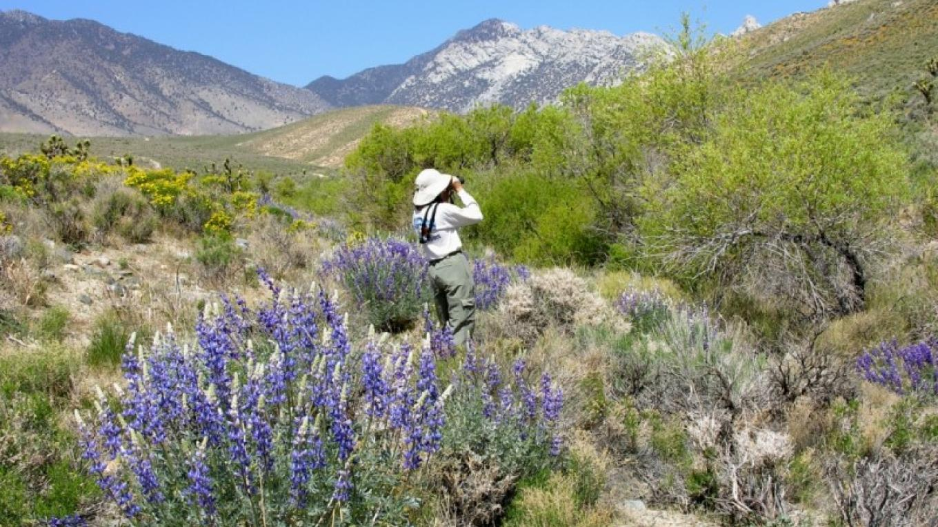 bird watching in Indian Wells Canyon – shelley ellis