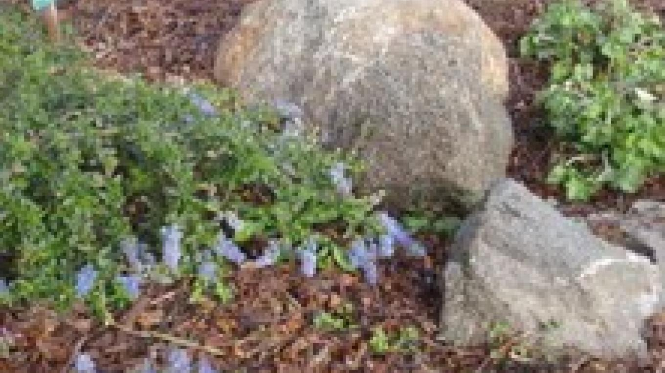 US Post Office Native Plant Garden – Redbud Garden Club