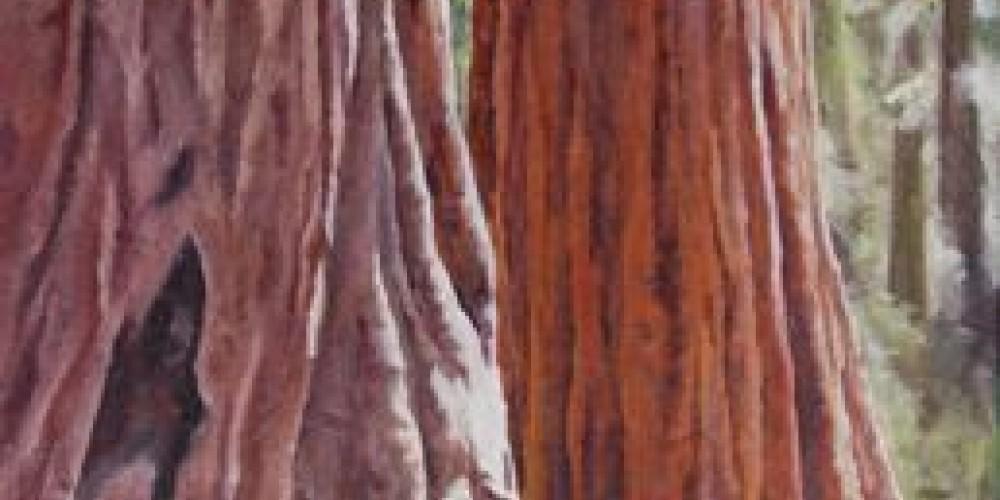 Giant Sequoias, oil painting