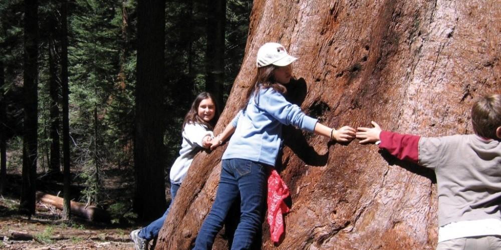 NatureBridge students circle a giant sequoia.