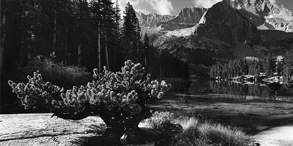 Dwarf Pine, Lake Reflection – Ben Dewell