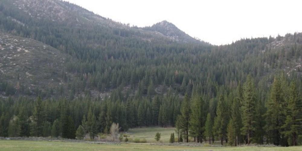 Grover Hot Springs Valley – J. Sisson