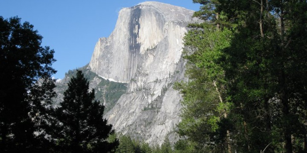 The forest floor frames Half Dome. – Candice N. Heinz