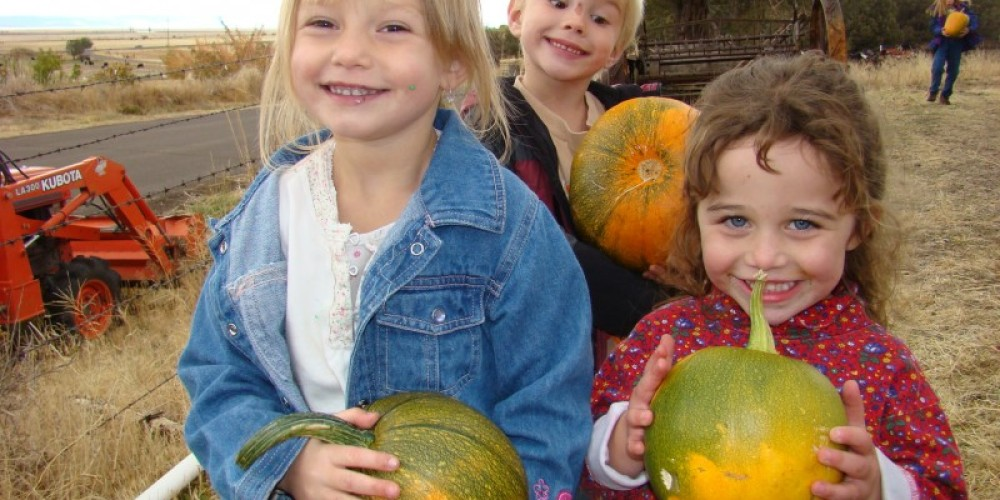 If the squash and pumpkins are ripe Betsy may let you pick your own special one. – Jean Bilodeaux